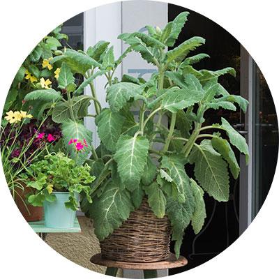 https://wildeblumen.com/uploads//images/angebot/angebot-pflanzen.jpg